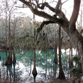 Radium Springs Creek