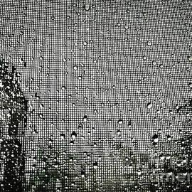 Rain Catcher by Angelo Merluccio