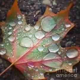 Rain Kissed Leaves