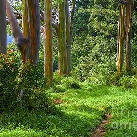Rainbow Grove by Ken Andersen