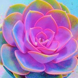 Sharon Ackley - Rainbow Succulent