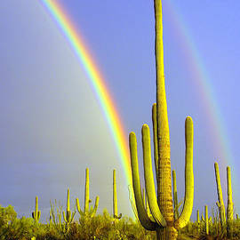 Rainbows And Saguaros  by Douglas Taylor