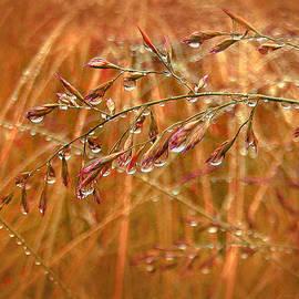 Jennie Marie Schell - Raindrops Falling on Autumn  Grasses