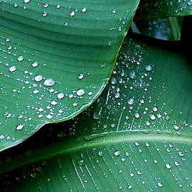 M E Wood - Raindrops on Green Leaves