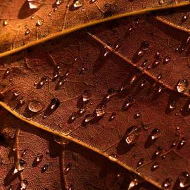Colin Woods - Raindrops on Leaf