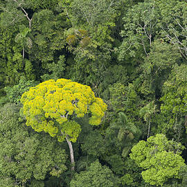 Rainforest Canopy Yasuni Ecuador by Pete  Oxford