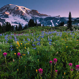 Dan Mihai - Rainier Flowering Meadow