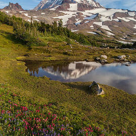 Rainier Wildflower Meadows Reflection by Mike Reid