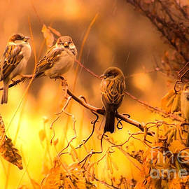 Raining Sparrows by Andrea Goodrich