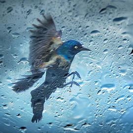 Steven  Michael - Rainy Day