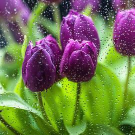 Jenny Rainbow - Rainy Tulips 1