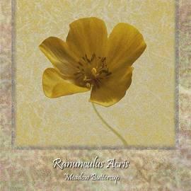 Ranunculus Buttercup Wild Flower Poster 4 by Barbara St Jean