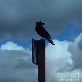 Jacklyn Duryea Fraizer - Raven Checking The Wind