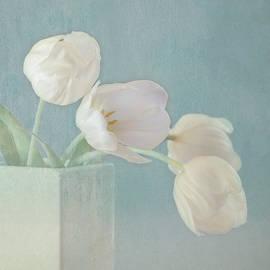 Kim Hojnacki - Ray of Beauty