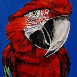Razzy Red - Bird- Macaw by Grace Liberator
