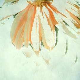 Reconstructed Flower No.1 by Bonnie Bruno