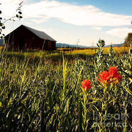 Meghan at FireBonnet Art - Red Barn