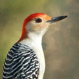 Deena Stoddard - Red Bellied Woodpecker Portrait