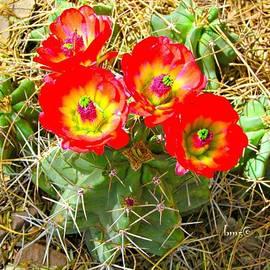 Barbara Zahno - Red Cactus Flowers