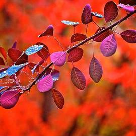 Red colors in fall by Lynn Hopwood