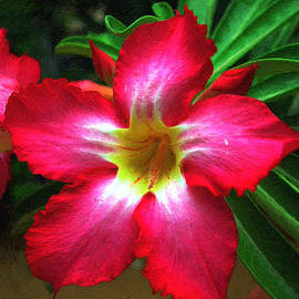 Red Hibiscus by Dean Wittle