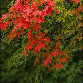 Red Leaves of Fall by LeeAnn McLaneGoetz McLaneGoetzStudioLLCcom
