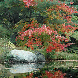 Red Maple Reflection by Bruce Gourley
