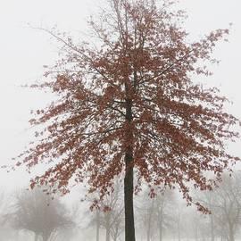 Lori Frisch - Red Oak in Winter