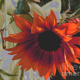 Red Orange Sunflower by Beverly Guilliams