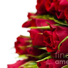 Anne Gilbert - Red Roses