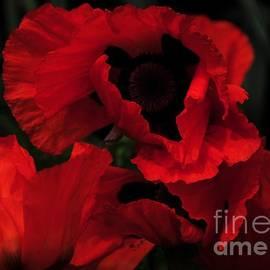 Kathleen Struckle - Red Ruffles
