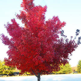 Red Tree in Autumn by Luther Fine Art