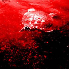 Turtle. RED and Black art by Oksana Semenchenko