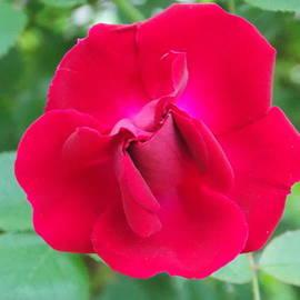 Red Velvet by Catherine Gagne