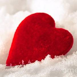 Sviatlana Kandybovich - Red velvet heart on snow for Valentine Day