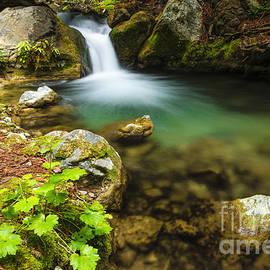 Russ Bishop - Redwood Grotto