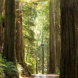 Beve Brown-Clark Photography - Redwood Morning