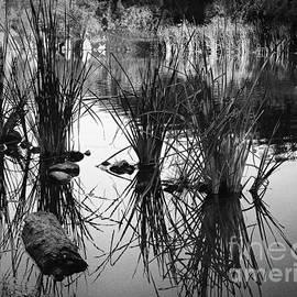 Reeds by Arne Hansen