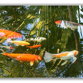 Mariarosa Rockefeller - Reflections in a Koi Pond