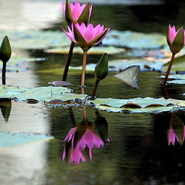 Suzanne Gaff - Reflections in Fuchsia