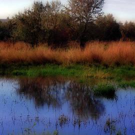 Molly McPherson - Reflections