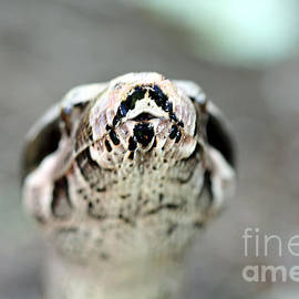 Inspired Nature Photography Fine Art Photography - Reptilian Beauty