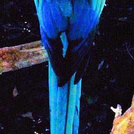 Glenn Aker - Resplendant Quetzal of Costa Rica