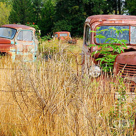 Retired Trucks in Fields of Gold by Connie Fox
