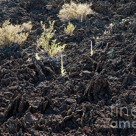 Returning To Life In Sunset Crater Volcano National Monument by Fred Stearns
