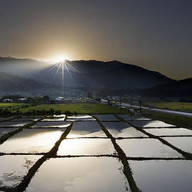 Hamid Reza Farzandian - Rice field at sunrise