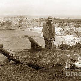 Rissos dolphin Grampus griseus circa 1892 by California Views Archives Mr Pat Hathaway Archives