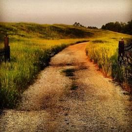 #road #dirtroad #gate #open #rural