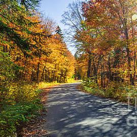 Road through fall forest by Elena Elisseeva