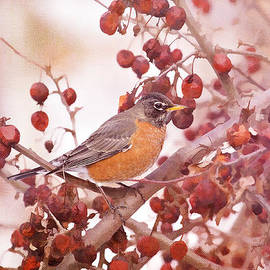 Daphne Sampson - Robin With Red Berries